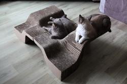 10003_cat_11