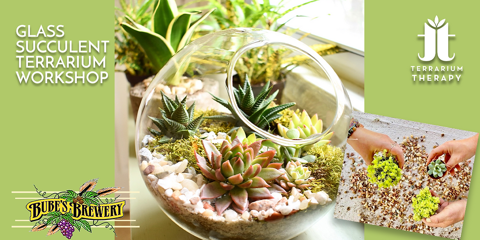 In-Person Glass Succulent Terrarium Workshop at Bube's Brewery