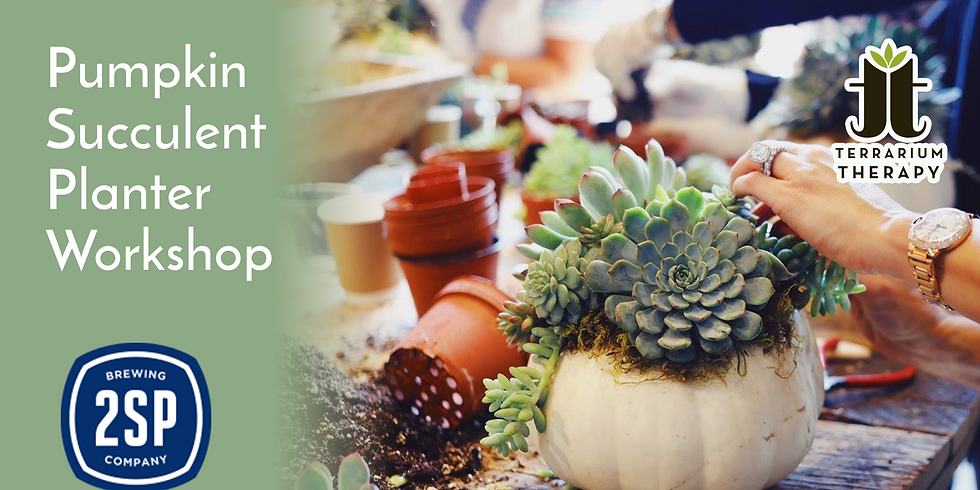 In-Person Pumpkin Succulent Planter Workshop at 2SP Brewing Company (1)