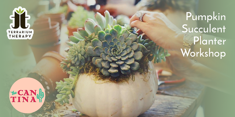 In-Person Pumpkin Succulent Planter Workshop at The Cantina York