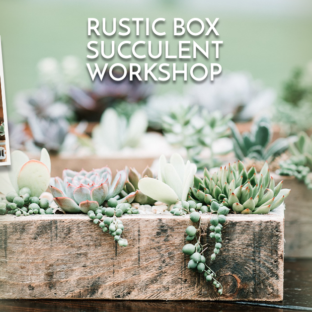 In-Person Rustic Succulent Box Workshop at Slate Farm Brewery