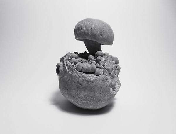 Punica-Fungi