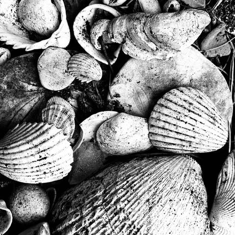 Shells_BW photograph.jpeg