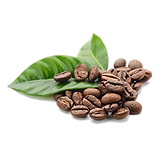 Coffee-Beans-Free-PNG-Image.png