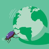 Insectes ird.jpg