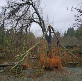 Broken tree limb