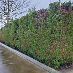 Cedar trim