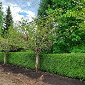 Leave and hedge trim