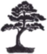 dreamstime_98353240 Bonsai Tree-1.jpg