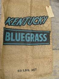 Kentucky bluegrass seed.jpg