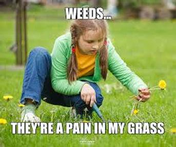 Weeds pain.jpg