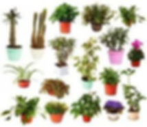 houseplants.jpg