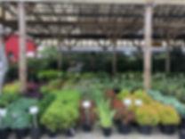 nursery stock pics 3.jpg