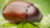 june-bug.webp