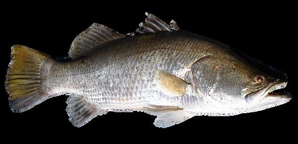 fish_PNG25136.png