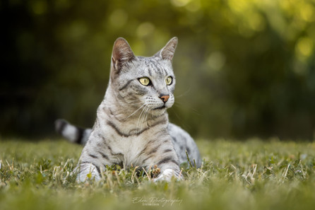 Chat dans le jardin