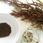 Dock seed processing