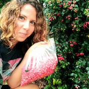 Collecting lilly pilly