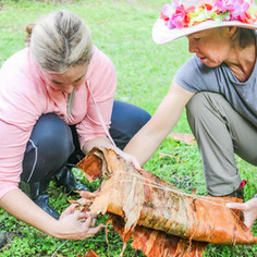 Wrapping fish in paperbark to cook in the fire