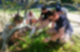 Sunshine Coast Foraging Workshop