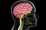 brain_spinal_cord-57fe96b15f9b5805c26d50