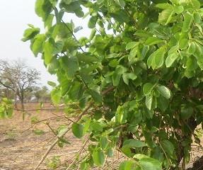 Les arbres sont d'éternelle source de guérison à l'état naturel