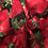 Thumbnail: Baumwollstoff bedruckt Timeless Erdbeeren