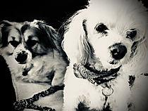 Milo & Tiara
