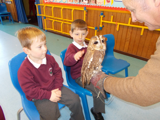 Owls Visit Heather Ridge