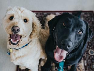 Recomendaciones para cuidar a tu mascota en cuarentena