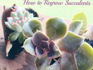 Growing your own succulent garden