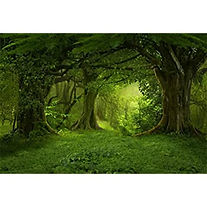 oak2.jpg