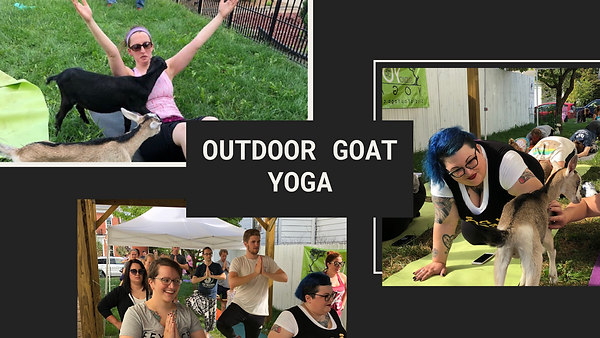 Outdoor_baby_goat_yoga_Greenwood.png