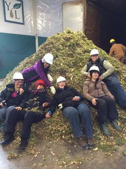 Young Living Highland Flats Tree Farm.2.jpg