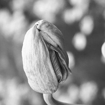 poppy-388992_1920_edited_edited.jpg