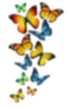 many-different-butterflies-background-27