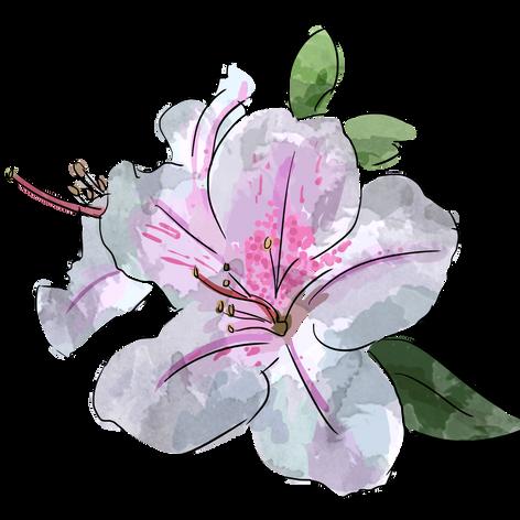 Rhodeodendron Illustration