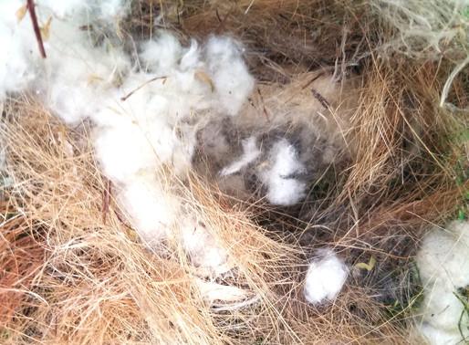 Bluebird Trail Report 3/2/2020