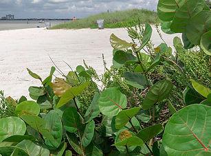 cypress_beach_slideshow.jpg