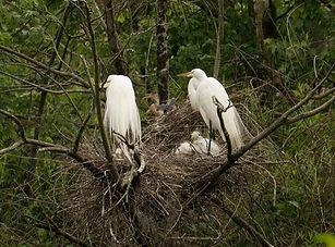 filename-p1040303-nesting.jpg