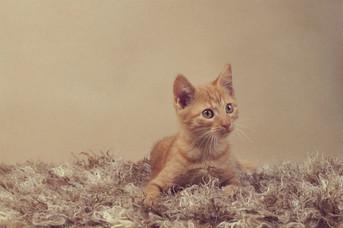 Portrait d'un chaton