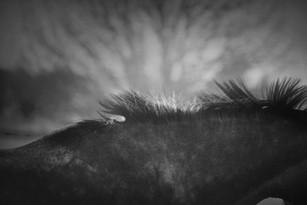 photographe tours portrait equestre cavalier chevaux