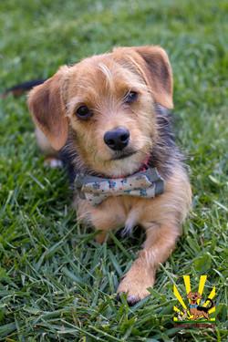 Chibi 1 year old