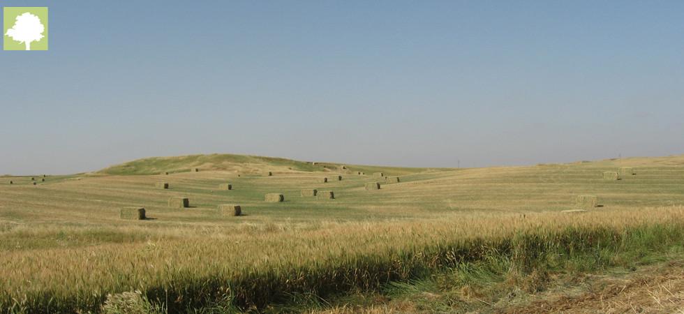משרד החקלאות - פיתוח הכפר