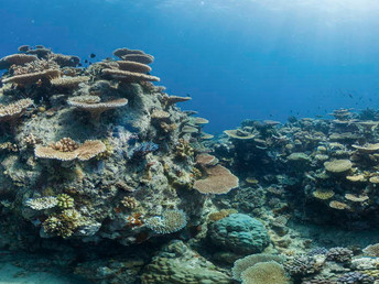 Study outlines hope for reefs