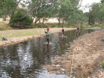 Re-diversifying waterways, a garden stake at at time