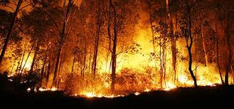 NSW bushfire inquiry to examine role of climate change