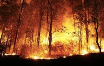 Free bushfire building standard to be released