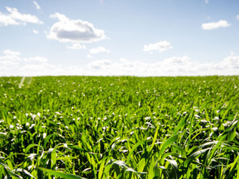 Queensland takes its biofuels ambitions global