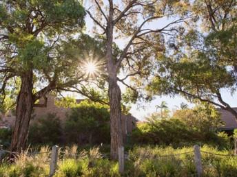 Melbourne unveils urban forest strategy